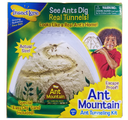 ANT MOUNTAIN ANT Habitat